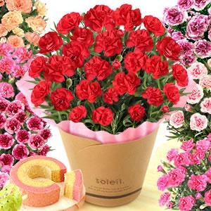 母の日 プレゼント カーネーション 鉢植え 5号 色