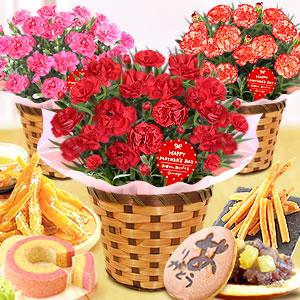 人気のスイーツセット 鉢花カーネーション