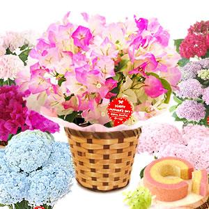 母の日 2021 選べる花E