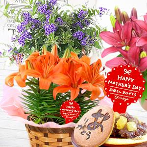 母の日 2021 花鉢 ゆり デュランタ