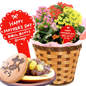 母の日 カーネーション以外 カランコエ花鉢画像