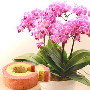 母の日 2021 胡蝶蘭チュンリーとバウム花 種類