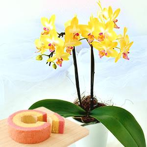 母の日 2021 胡蝶蘭レモンパイとバウム 花 種類